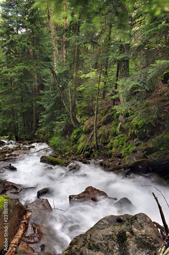 Deurstickers Rivier Mountain river with a rapid flow in the forest in the region of the Caucasus Mountains.