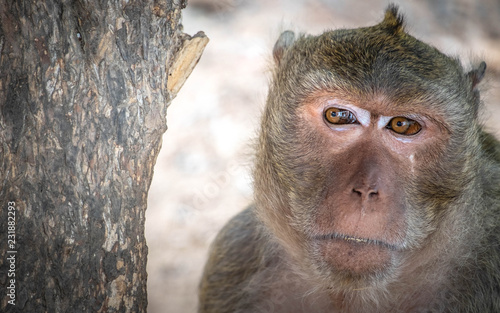 Foto op Aluminium Aap The behavior of monkeys every day varies.