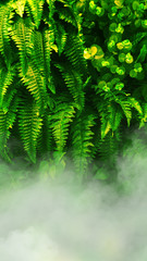 FototapetaVertical garden with tropical green leaf with fog and rain.
