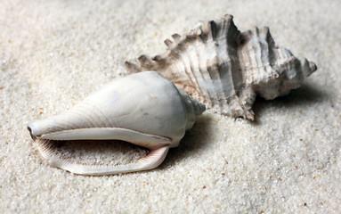 Fototapeta Shells