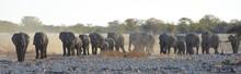 Elefantenherde Am Wasserloch Okaukuejo Im Etosha Nationalpark In Namibia