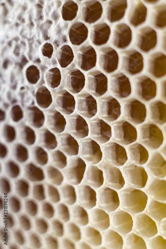 Staande foto Macrofotografie honeycombs full of honey. close up. macro