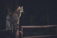 Cat Sitting On Fence