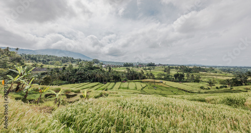 In de dag Pistache Rice field Terrace