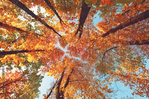 Colored autumn forest in warm sunlight, fall season outdoor scene © e_polischuk