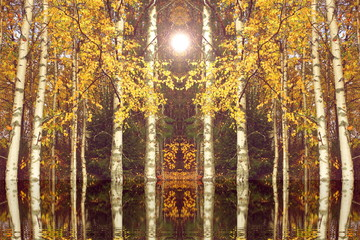 Panel Szklany Las autumn landscape birch door in the fall of concept the Queen of autumn