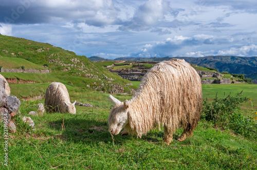 Deurstickers Zuid-Amerika land Sacsayhuaman, Inca ruins in Cusco, Peru