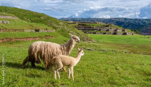 Foto op Aluminium Zuid-Amerika land Sacsayhuaman, Inca ruins in Cusco, Peru
