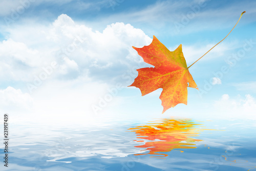 Fotografie, Obraz  Autumn Maple leaf falling in to water with nice reflection and bright blue sky