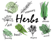 Hand Drawn Herbal Elements. Ve...