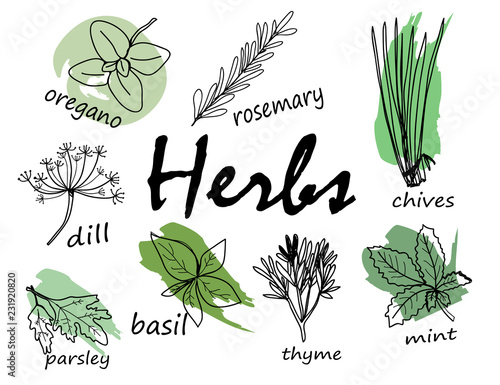 Fotografiet Hand drawn herbal elements. Vector set