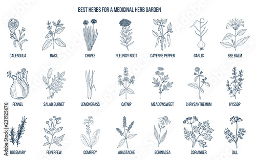 фотографія Best herbs to grow in your medicinal garden