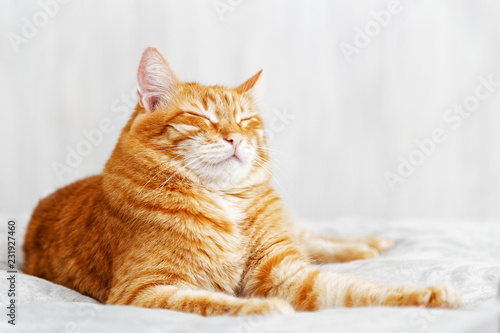 Red cat lying on the bed and dozing off with eyes closed