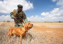 Anti-poaching Dog Training