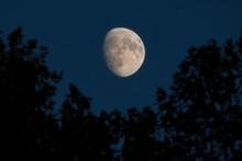 Lune Gibbeuse Au Dessus D'une Forêt