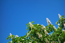 Sweet Chestnut  And Blue Sky Geometric Background