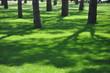canvas print picture - Schatten auf grünem Rasen