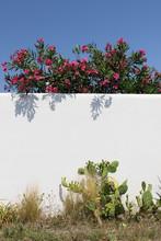 Oleander And Opuntia Cactus