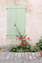 Hollyhock Plants In Front Of A Wall