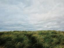 High Green Grass In Windy Storm