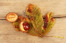 Conker And Autumnal Leaf