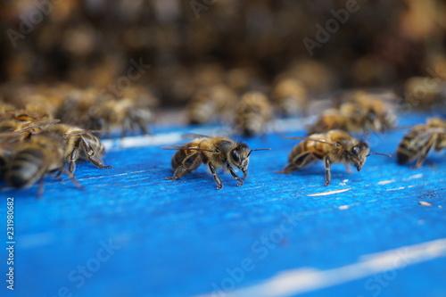 Aluminium Prints Bee Bienen
