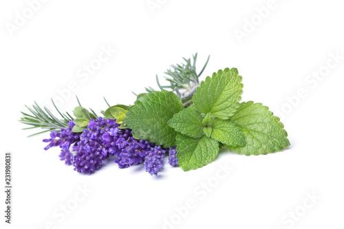 Türaufkleber Aromastoffe Rosmarin, Lavendel und Zitronenmelisse - Freisteller