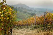 Barolo Wine Region, Langhe, Piedmont, Italy