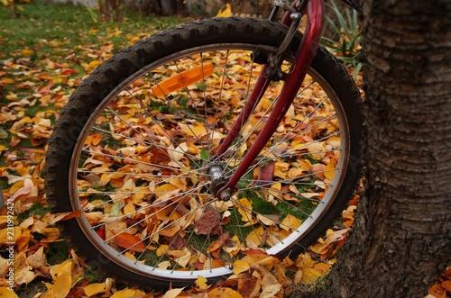 Koło roweru na tle jesiennych kolorowych liści