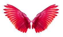 Red Wings On White Background