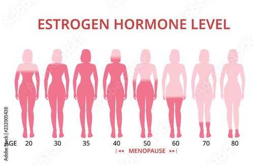 Estrogen hormone levels chart, menopause, vector