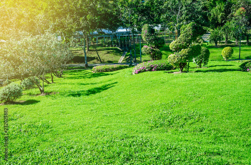 Landscape formal, Front yard is beautifully designed garden, Peaceful Garden, Morning sunlight shines on the green lawn in a peaceful garden.