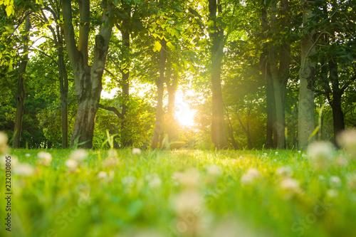 Fototapeta morning forest sunshine obraz na płótnie