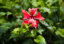 Beautiful Blossom Of Lonely Red Flower