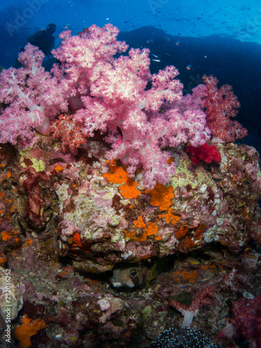 Fototapety, obrazy: coral under the sea
