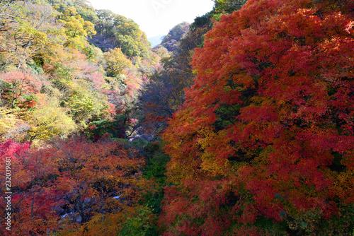 天ヶ谷渓谷の紅葉