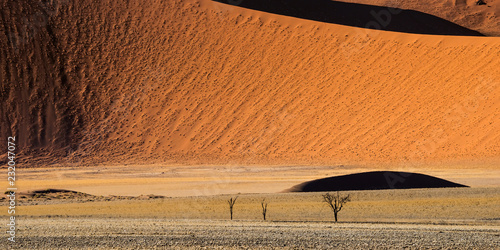Fotografie, Obraz  Close view of the dead drought trees at the foot of red sand dunes