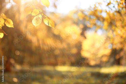 Papiers peints Vignoble Autumn background in the park