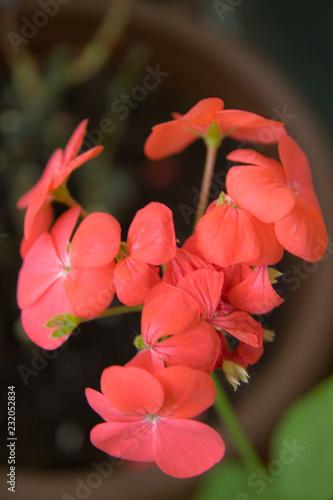 Garden Poster Bestsellers Scarlet floret