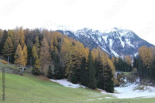 Fotobehang Olijf Switzerland Mountains Landscape