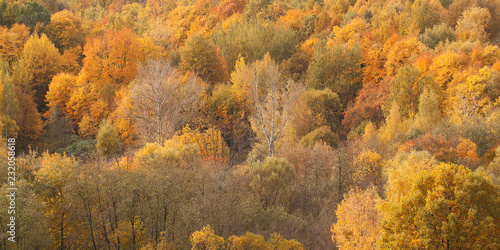 Photo Stands Roe autumn sunny forest with beautiful colorful bright tree crowns