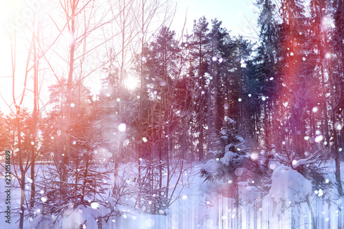 Foto op Plexiglas Crimson Winter forest on a sunny day. Landscape in the forest on a snowy morning. New Year's winter forest.