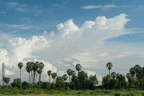 Staande foto Blauwe jeans tropical landscape with palms