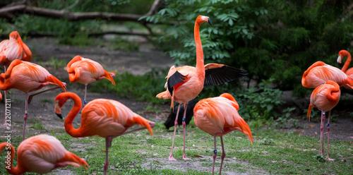 Tuinposter Flamingo Flamingo flapping