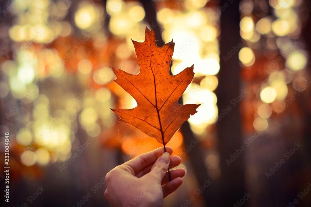 Fototapeta Jesienny liść w dłoni na tle lasu