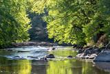 Wild Swedish river in september