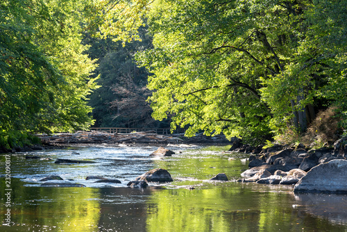 Obraz Wild Swedish river in september - fototapety do salonu