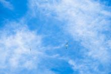 Australian Gannet Bird Flying Over The Blue Sky.