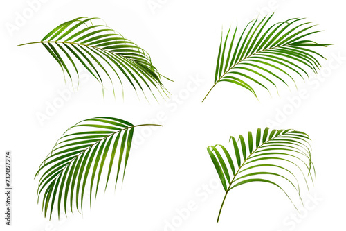 Cadres-photo bureau Palmier Set of Green leaves of palm isolated on white background.