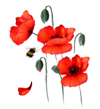 Beautiful Red Poppies And Flyi...